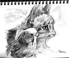 mandatory daily cat sketch 350 by nosoart