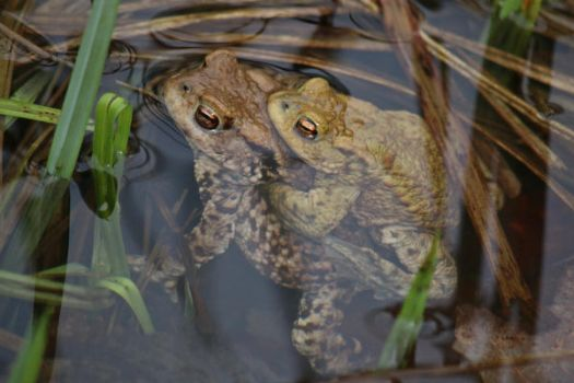 Toad Stock 03 by Malleni-Stock