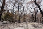 ryans road burnt bush by jakwak