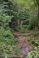 Forest and brook of Carbet in Martinique by A1Z2E3R