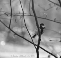 Shades Of March 56 by dandy-cARTastrophe