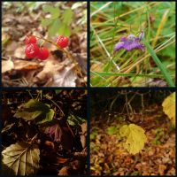 Autumn squares 081013 by Dreamplayer