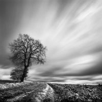 Lonesome tree by Loran31