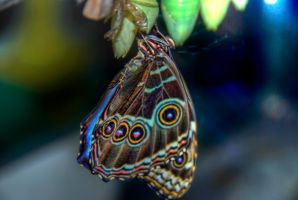 Butterfly HDR 01 by Creative--Dragon