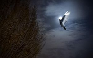 Pigeon At Full Moon by TheBigDaveC
