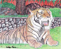 Tiger in zoo by isabel56