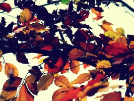 orange leaves in the wind 2 by Zyuza