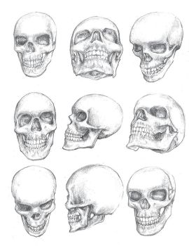 Skull-Study by AceHornet