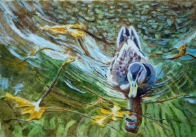 Duck by h-i-l-e-x