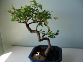 Bonsai by OrigamiGenius