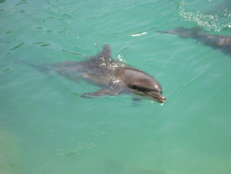Dolphin by steffi955