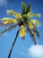 Palm tree by geshorty34