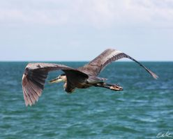 Flying over the ocean by wolmers