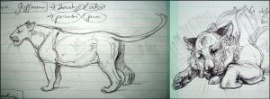 Study Notes Sketches: Lions by TheUrbanFox