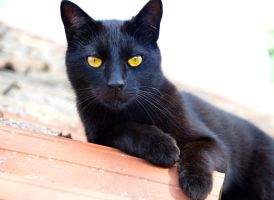 Black cat by Very-Free-Stock