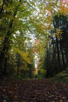 fall 2015 - 10 by LucieG-Stock