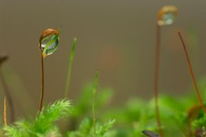 A Drop Of Moss by crimsonpenguin