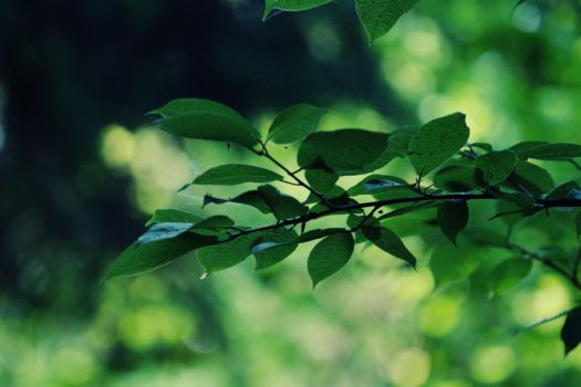 Leaves 03 by boxx2genetica-stock