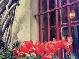 Paris Tulips by ssangie