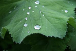 water drop and the leaf 1 by Aqua-Designs