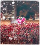 Grave Blooms by wreckles