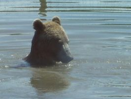Bear in the Water by Jadeling