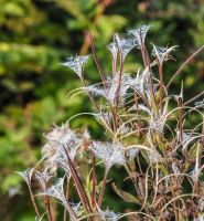 Just wild. Fireweed. by jennystokes