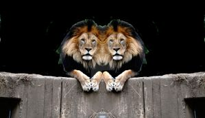 TWINS,  PHOTOMANIPULATION by Anand-Swaroop