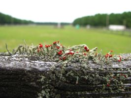 Moss in Reds and Greens by Heavenation05