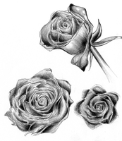 Roses by Feyon