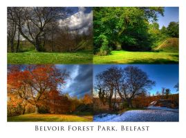 Belvoir Tree in Four Seasons by Gerard1972