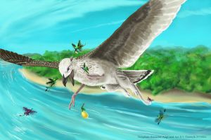 T-Augi-Young Gryphon-1 by LeccathuFurvicael