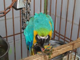 Macaw 04 by dlc-nature-stock