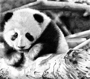 Baby Panda by BannanaPower