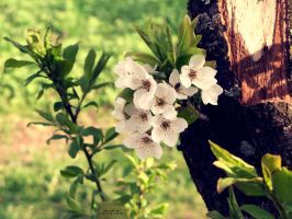This spring I felt in love by summerly-sunshine