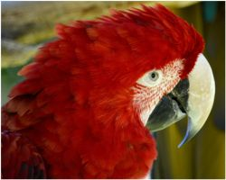Parrot 05 by Skip1967