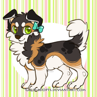 CLOSED | Border Collie Auction by gold-adopts