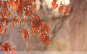 Autumn Shower Wallpaper by Clu-art