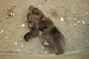 little bear_05 by Sangvinar