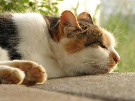 Cat in Japan:Cat on street 09 by iguru71