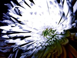 Flower of the Night by Adomius