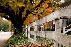 The Changing Seasons by 5ev