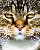 Day Sixty Two: Cats Eyes by Kaz-D