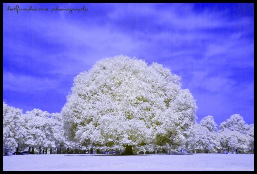 IR Tree by Jesse-Halfwayhome