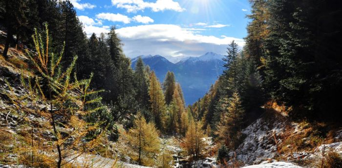 Firs And Larches by Ceejay8887