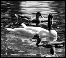 The Ugly Duckling by kittykitty5150