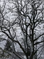 Bare tree branches 1 by dull-stock