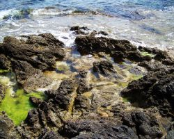Tidal Pool by Xercesa