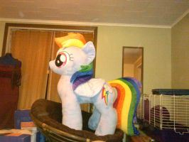 Finished Lifesize Dashie (better pics to come) by sockfuzzy