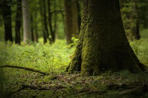 Foret Mormal by Euphoria59